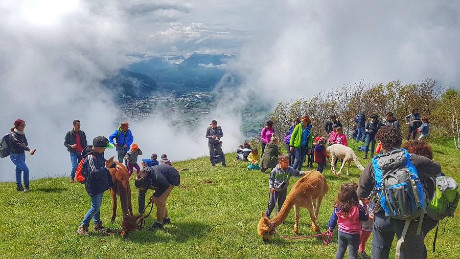 Trekking con gli alpaca a Malga Cimana