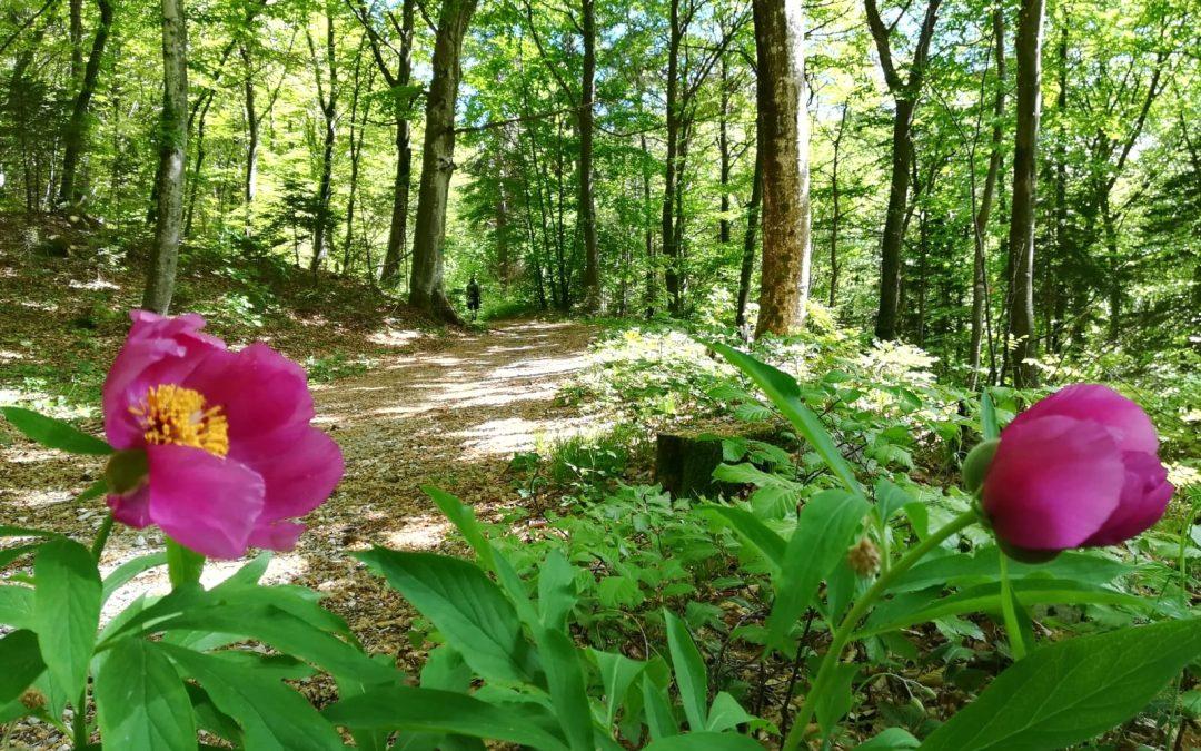 Bagni di bosco e sapori di montagna